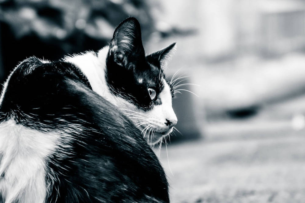 コンセントを探す猫の写真
