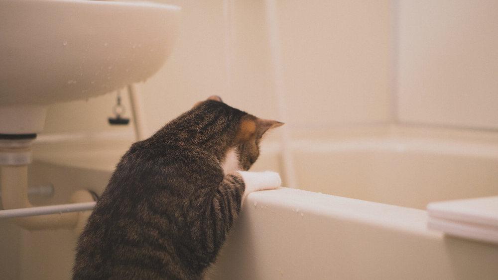 【洗面所の詰まりについて気にする猫