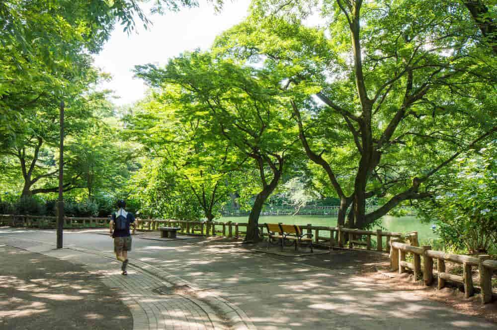 【吉祥寺駅の一人暮らし】吉祥寺駅の井の頭公園